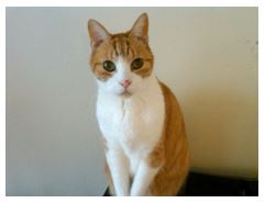 Sammy_The_Best_Orange_Tabby_Cat