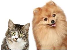 Dog Cat Pet Insurance