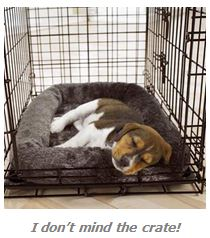 Crate Training For Dog Owners