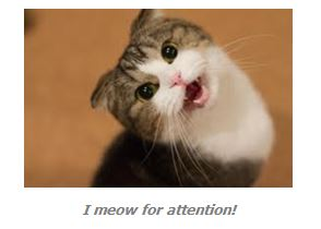 Why do our cats meow loud