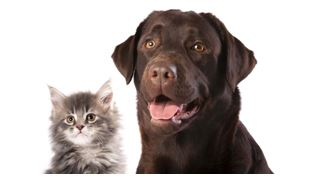 Dental Health For Cats and Dog
