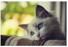 Heartworm Disease in Cats 1