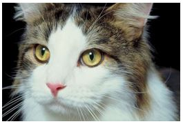 Infection in Your Cat