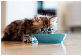 What To Feed A New Kitten