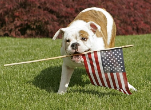 4th-of-july-dog (1)