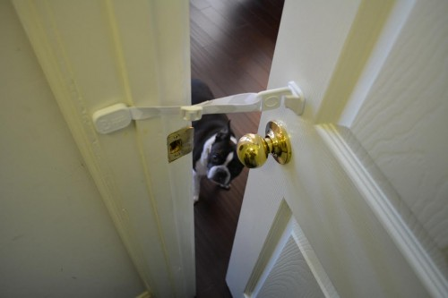 door buddy dog