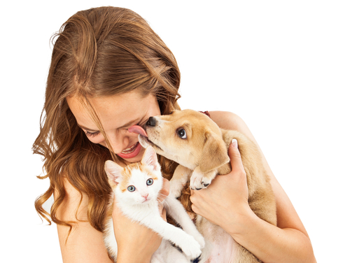 A pretty young girl holding a cute orange tabby kitten and an affectionate puppy that is licking her face as she is laughing