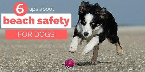 tips for dogs at the beach