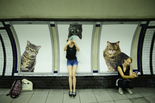 cats london tube