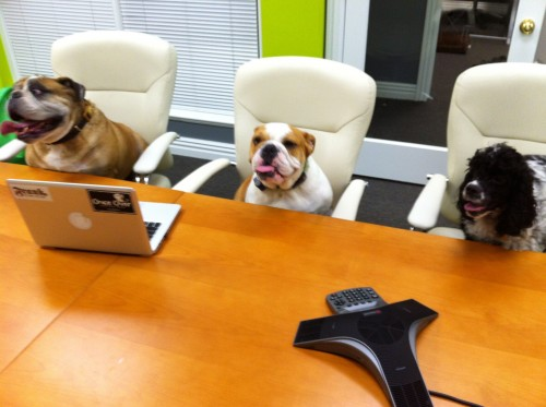 dogs at office
