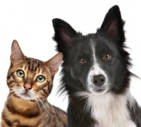 Omega Fatty Acids for pets