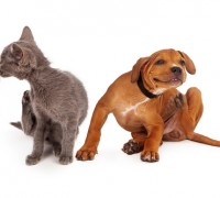dog and cat with fleas