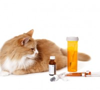 cat medication