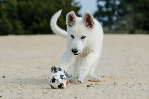 7 safety tips for dog at beach
