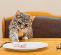 food items dangerous to cats