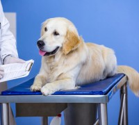 take pet to vet