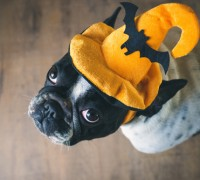 safety tips for pets on halloween