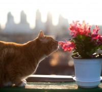 dangerous flowers for cats
