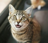 cat leave mouth open