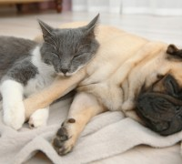 dogs sleep as much as cats?