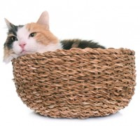 cat in small space