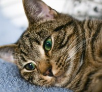 cats with dental disease