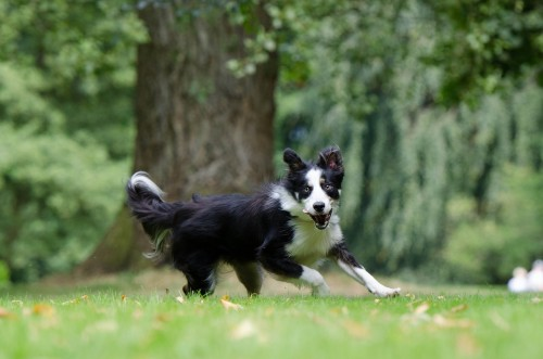 dog zoomies - what it means