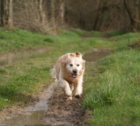 how much exercise for dogs