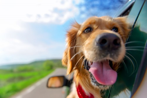 traveling cross country with pets