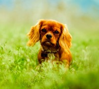 spring cleaning ideas with dogs