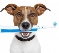 pet insurance dental care