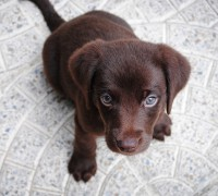 common illness in puppies