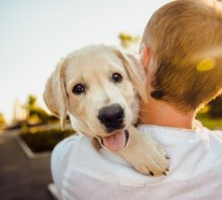best pet insurance florida